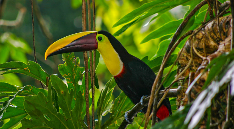 Belize Toucan Jungle Tours