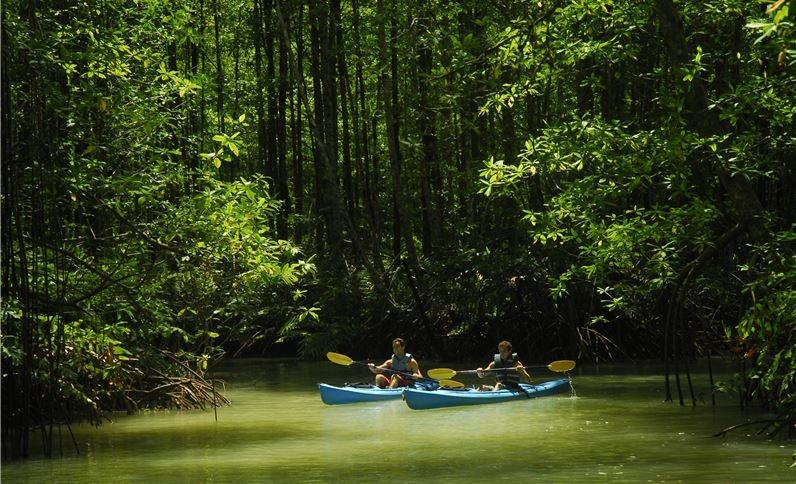 Kayak mangrove forests in Costa Rica