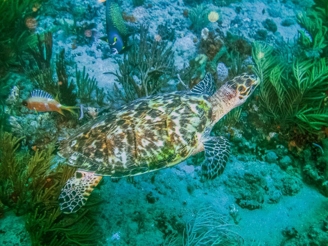 Dive with Sea Turtles in Costa Rica